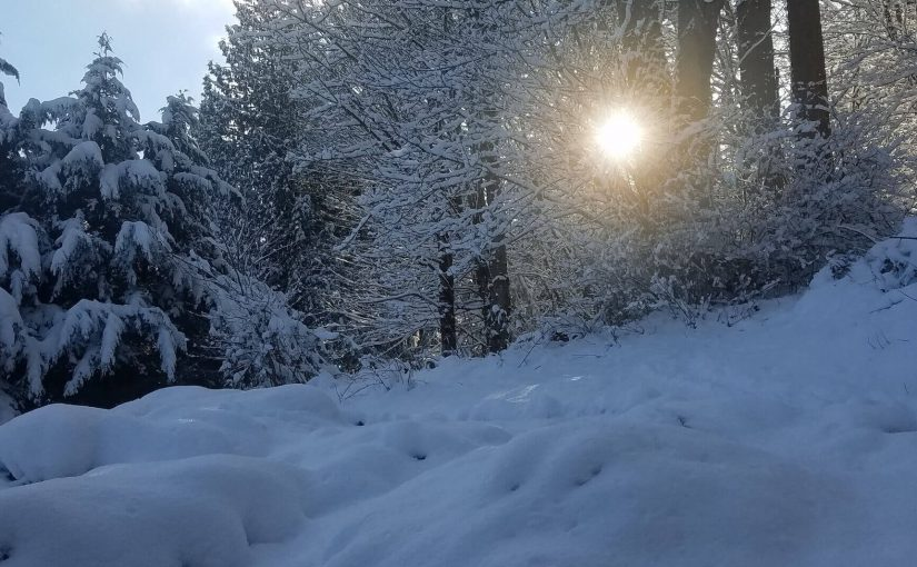 A sunbeam bursting through a forest of snow covered trees